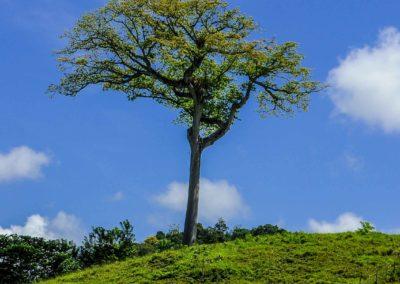 restafoto-Naturaleza-La-Ceiba